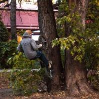 Воллтоп по дереву